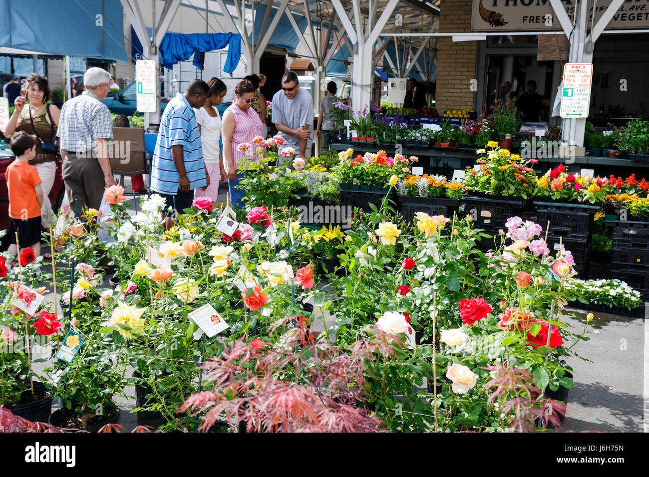 Virginia Roanoke Market Square Farmers' Market plants for sale nursery potted plants shopping rose bush flower - Stock Image