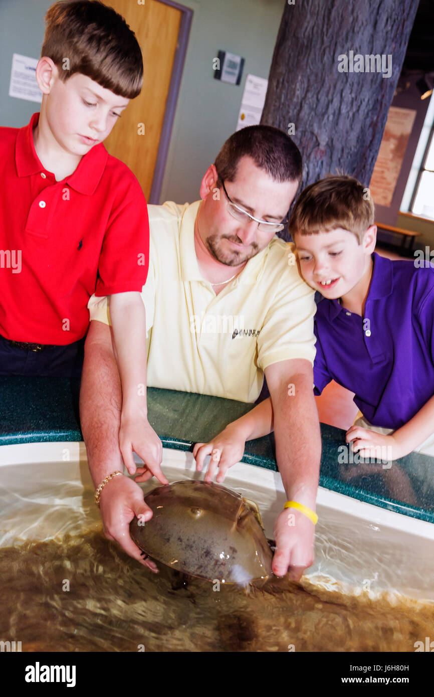 Virginia Roanoke Science Museum of Western Virginia learning exhibits Touch Tank horseshoe crab man father boy son - Stock Image