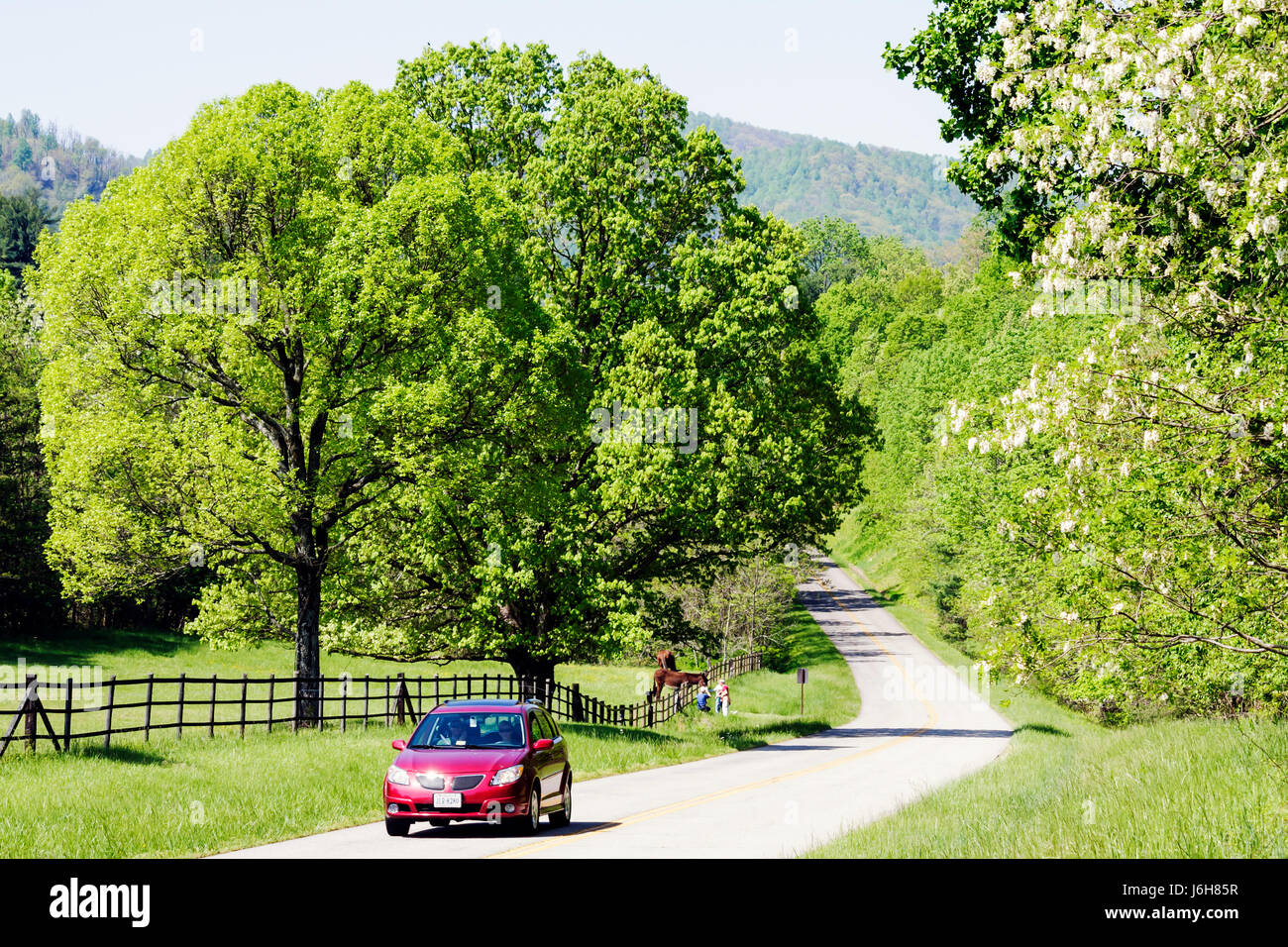 Virginia Roanoke Blue Ridge Parkway Appalachian Mountains car vehicle pasture trees - Stock Image