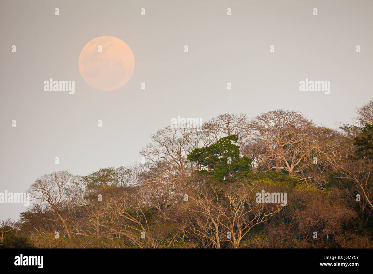 Moon over the rainforest beside Rio Chagres in Soberania National Park, Republic of Panama. - Stock-Bilder