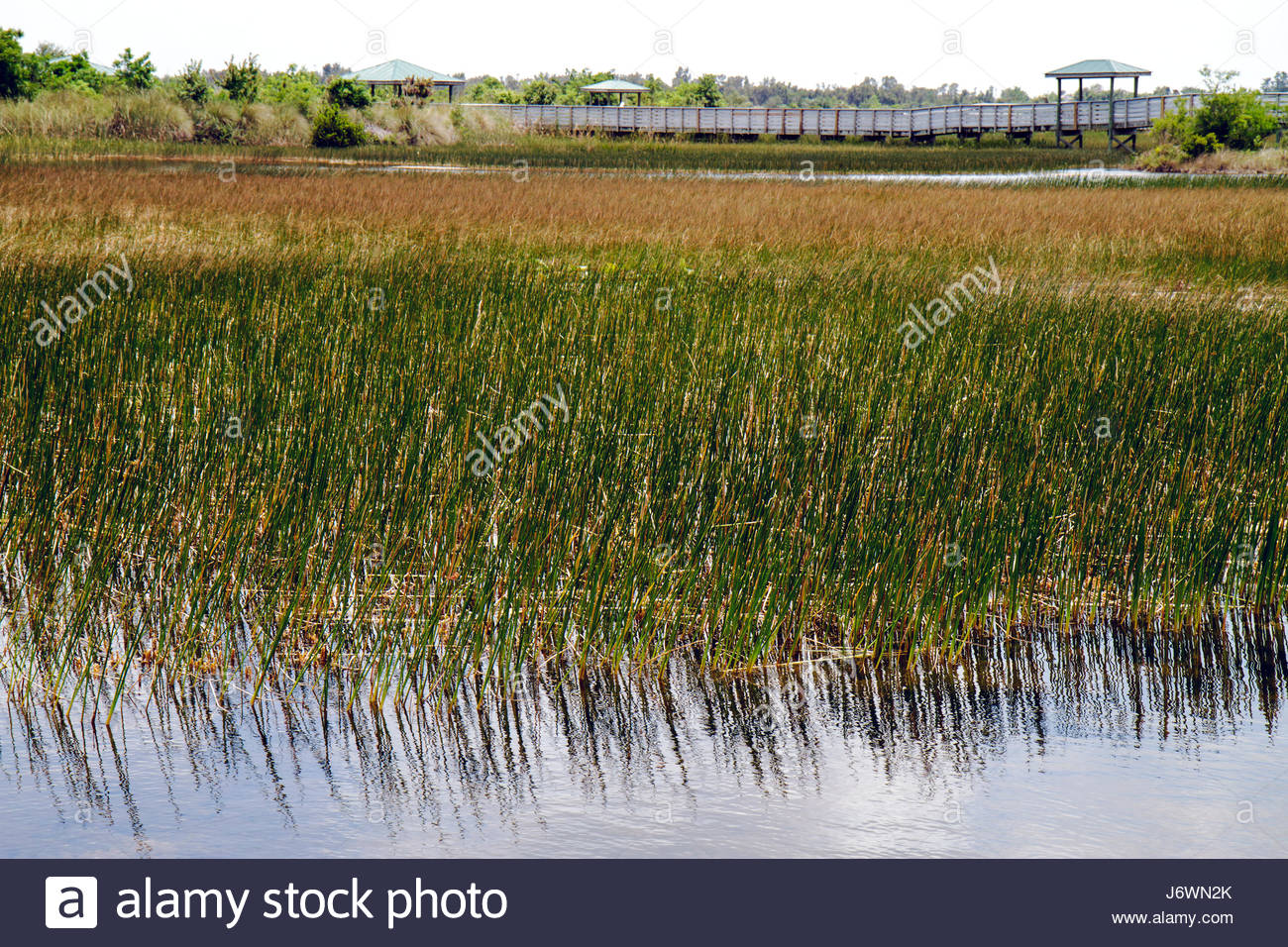 Fort Lauderdale Ft. Florida Pembroke Pines Chapel Trail Nature Preserve saw grass - Stock Image