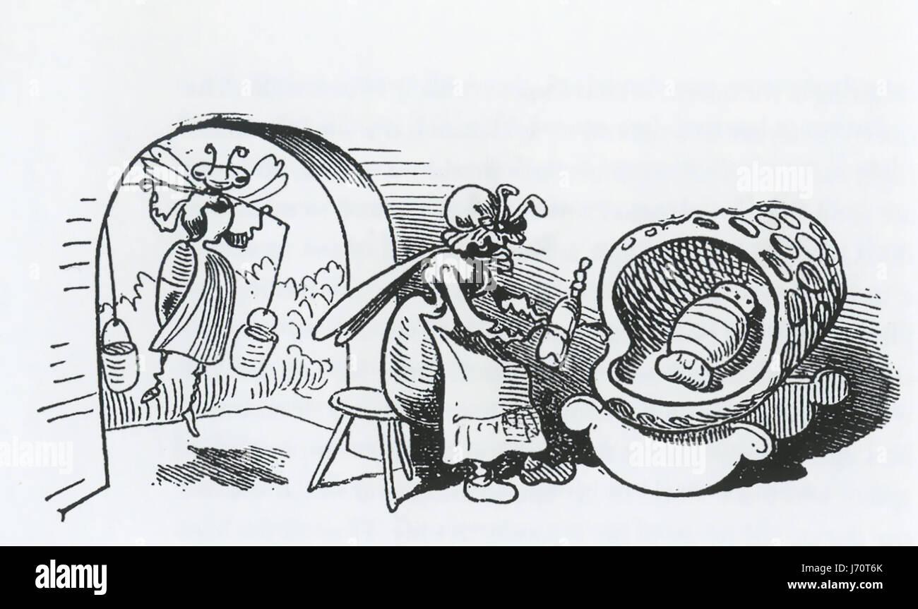 WILHELM BUSCH (1832-1908) German illustrator. From his 1872 book Buzz a Buzz showing 'nurse bees' - Stock-Bilder