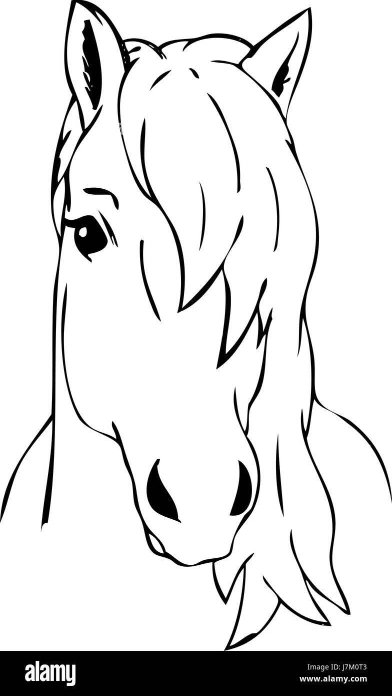 Colour Illustration Paint Draw Cartoon Art Isolated Horse