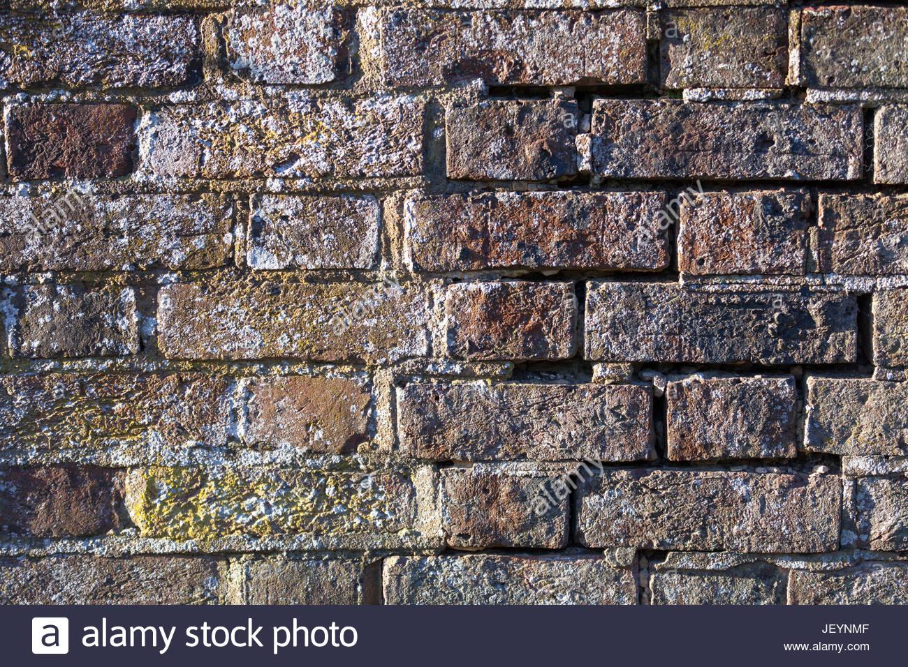 English brickwork in a poor state of disrepair crack algae lichen damp uk Stock Photo