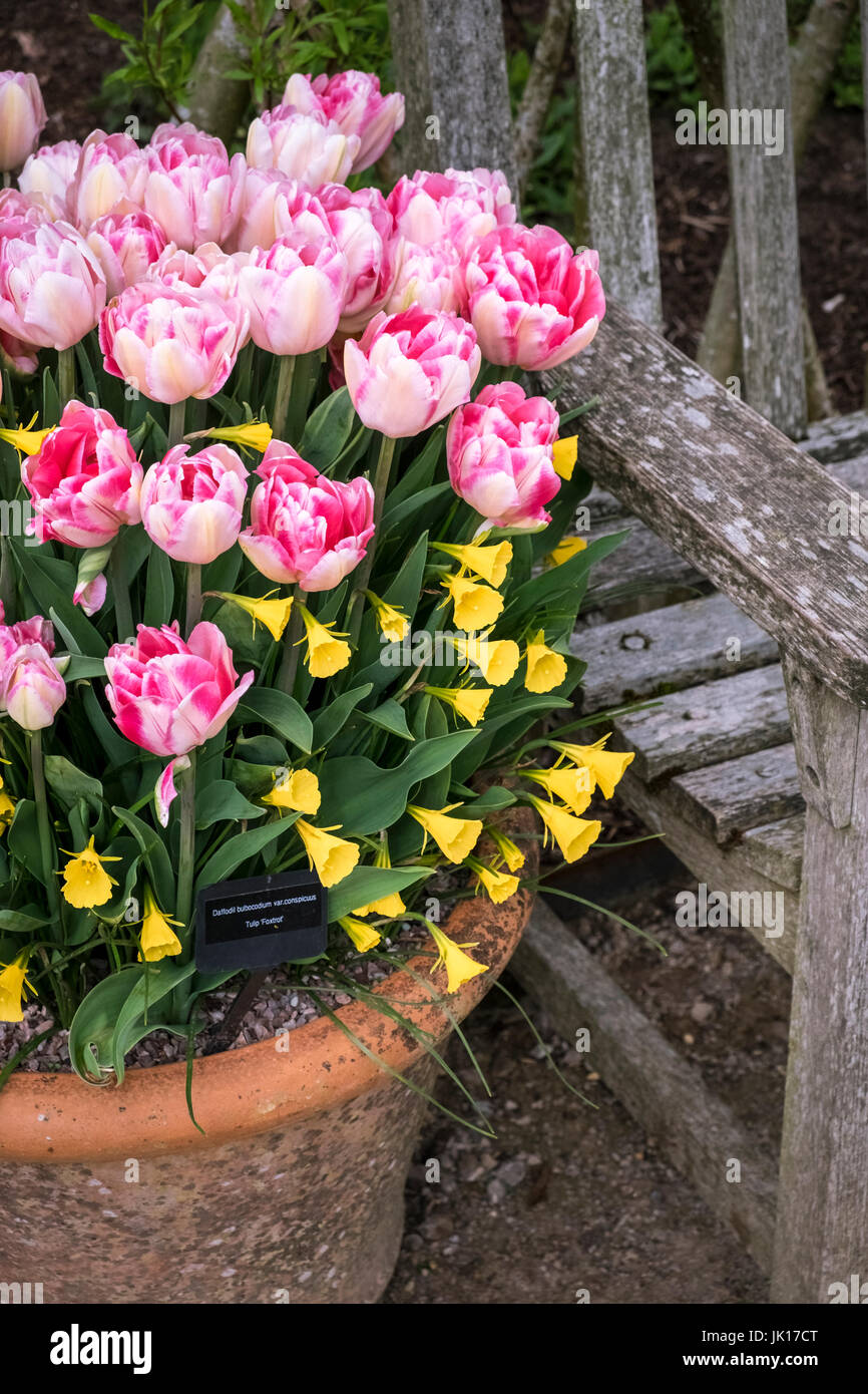 spring-garden-container-with-tulip-foxtr