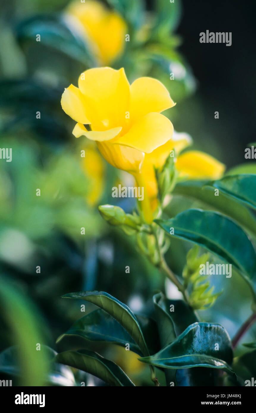 Yellow flower - Stock Image
