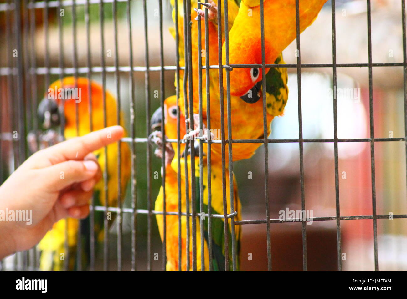 birds inside the cage - Stock Image