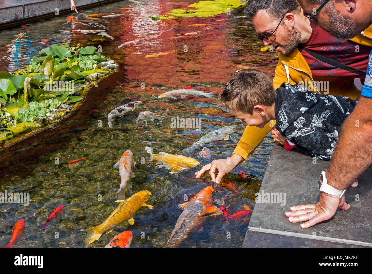 tourists-with-child-feeding-colourful-koi-fish-cyprinus-rubrofuscus-JMK7KF.jpg