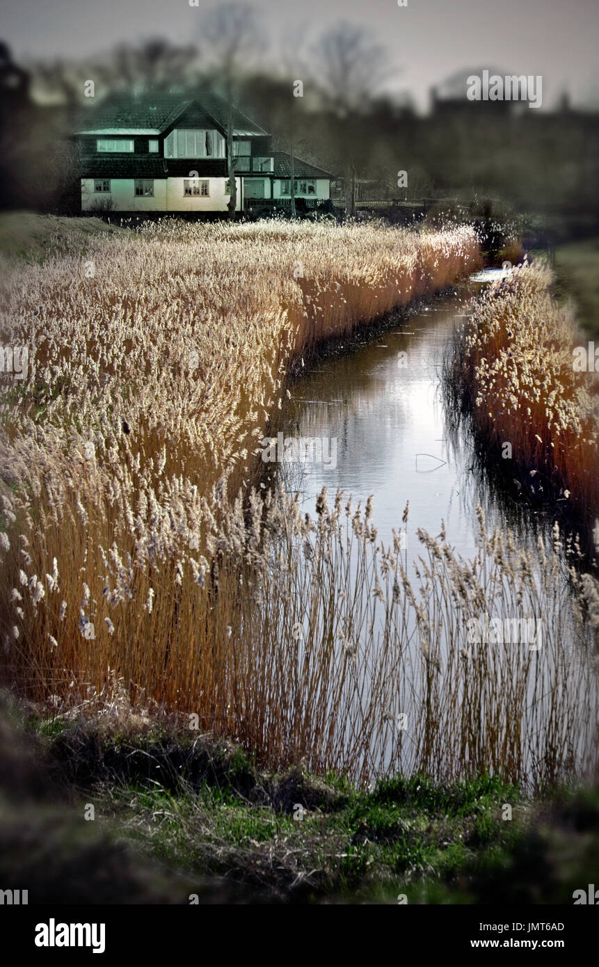 house in the marshes - Stock Image