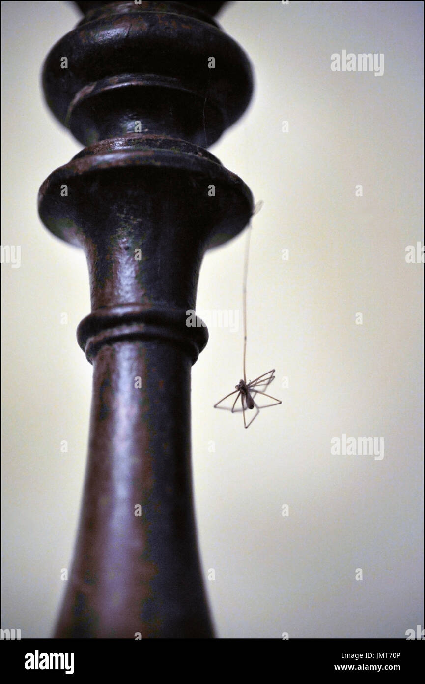 dead spider hanging on stair rail - Stock Image