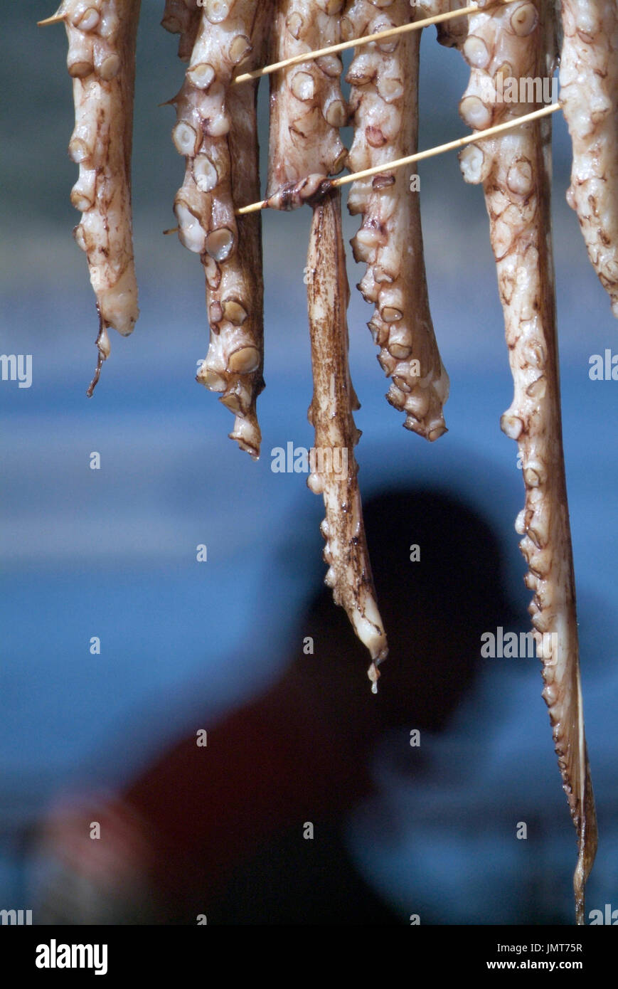 octopus drying in the sun - Stock Image