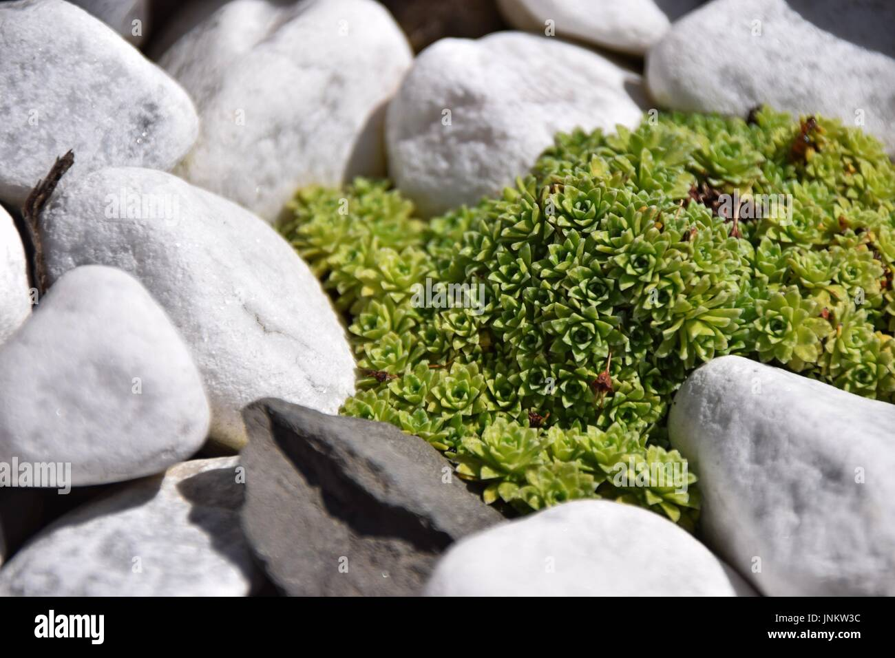 rock garden with succulents stock photos rock garden with succulents stock images alamy. Black Bedroom Furniture Sets. Home Design Ideas