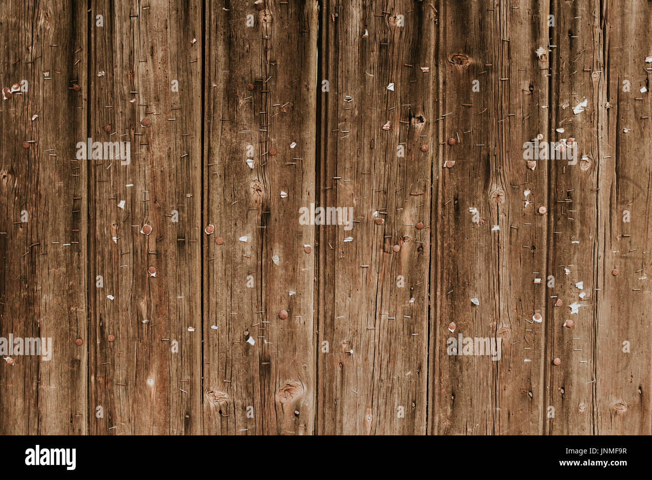 Wooden background with lots of stapler pins in it - Stock Image