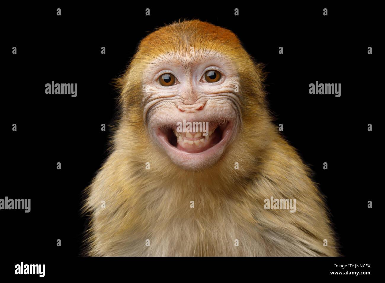 Bonobo behind the mask - 5 5