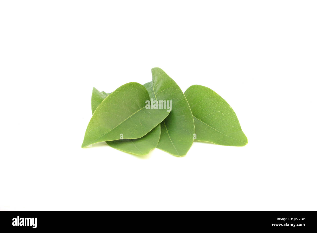 leaves of cassia fistula stock photos amp leaves of cassia