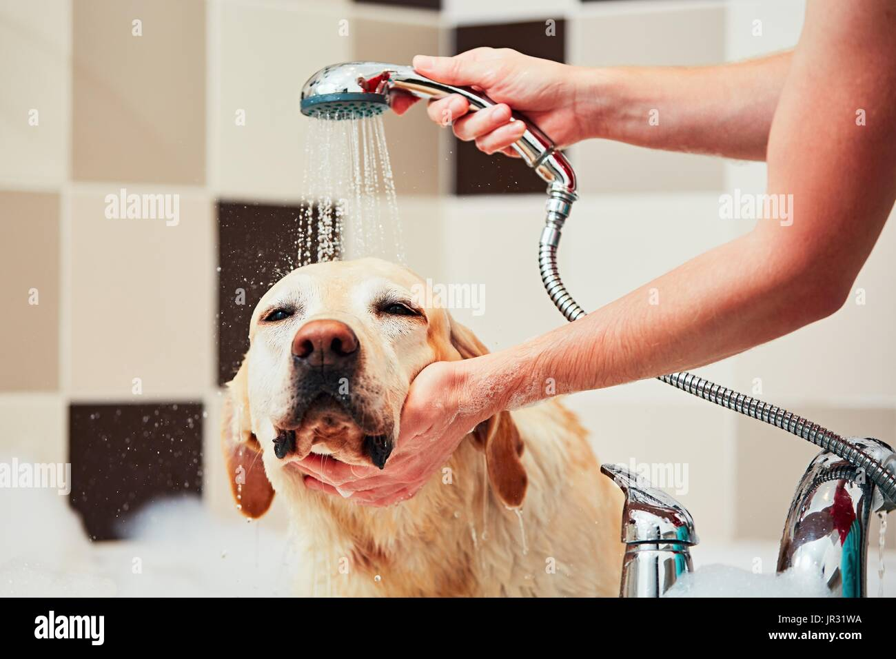 a personal recount about bathing a dog At age 80 she is a personal trainer  velvet went bathing suit shopping that her view changed witnesses recount texas school shooting.