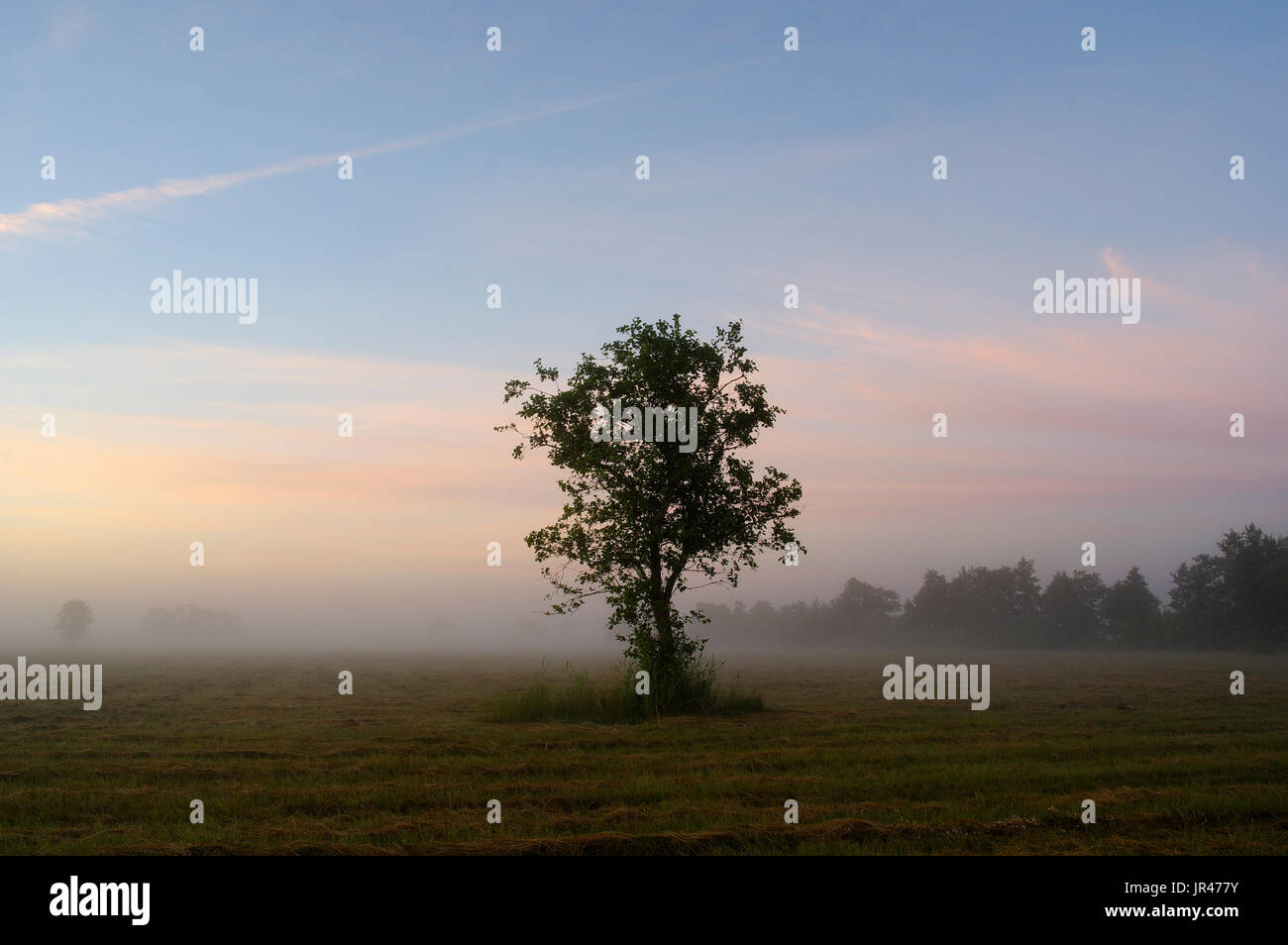 Early Morning Landscape of Matsalu National Park. Estonia 27th July 2017 - Stock Image
