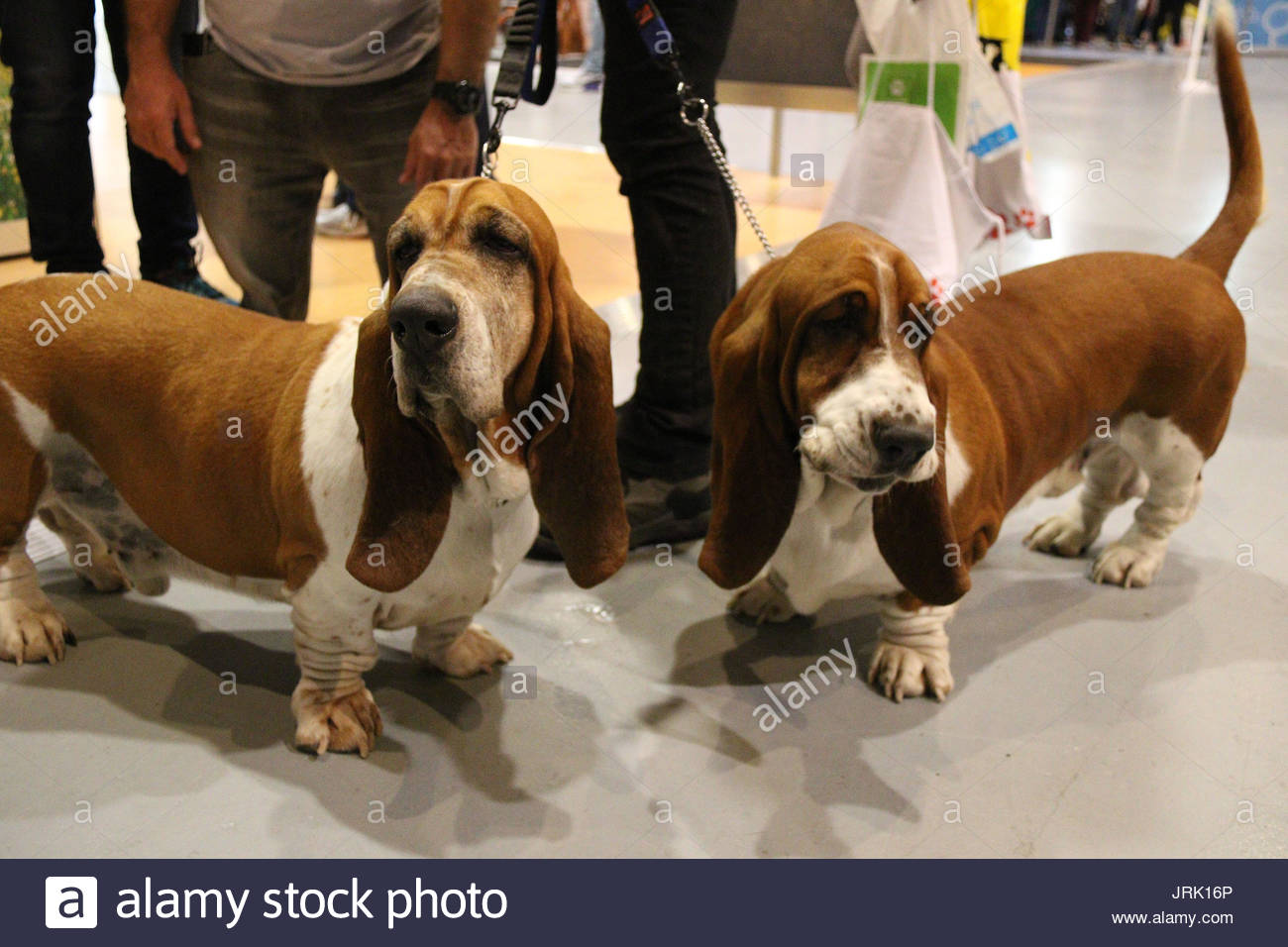 Annual Dog Lovers Show Sydney