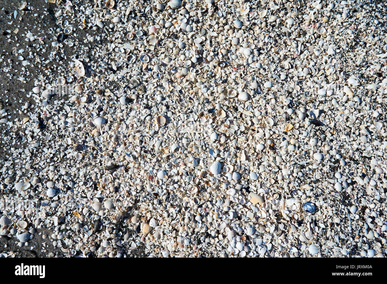 chalk from sea shells Best answer: natural chalk is a type of soft, fine-grained, whitish-gray limestone, made from the shells of millions of tiny ancient marine organisms england's famous white cliffs of dover are made of this kind of chalk.