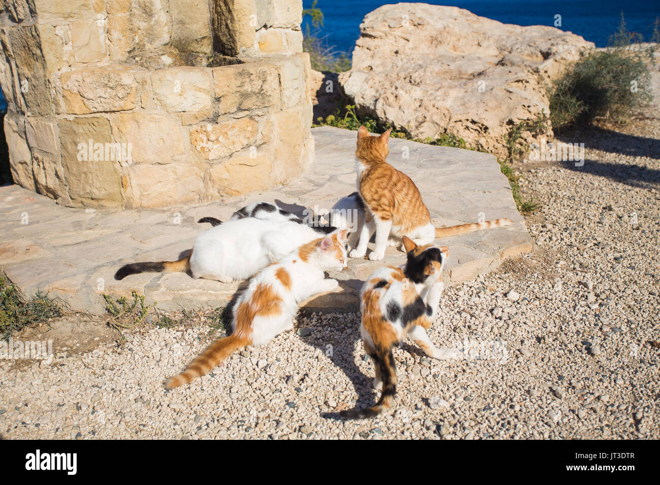 Cyprus Kittens And Cats