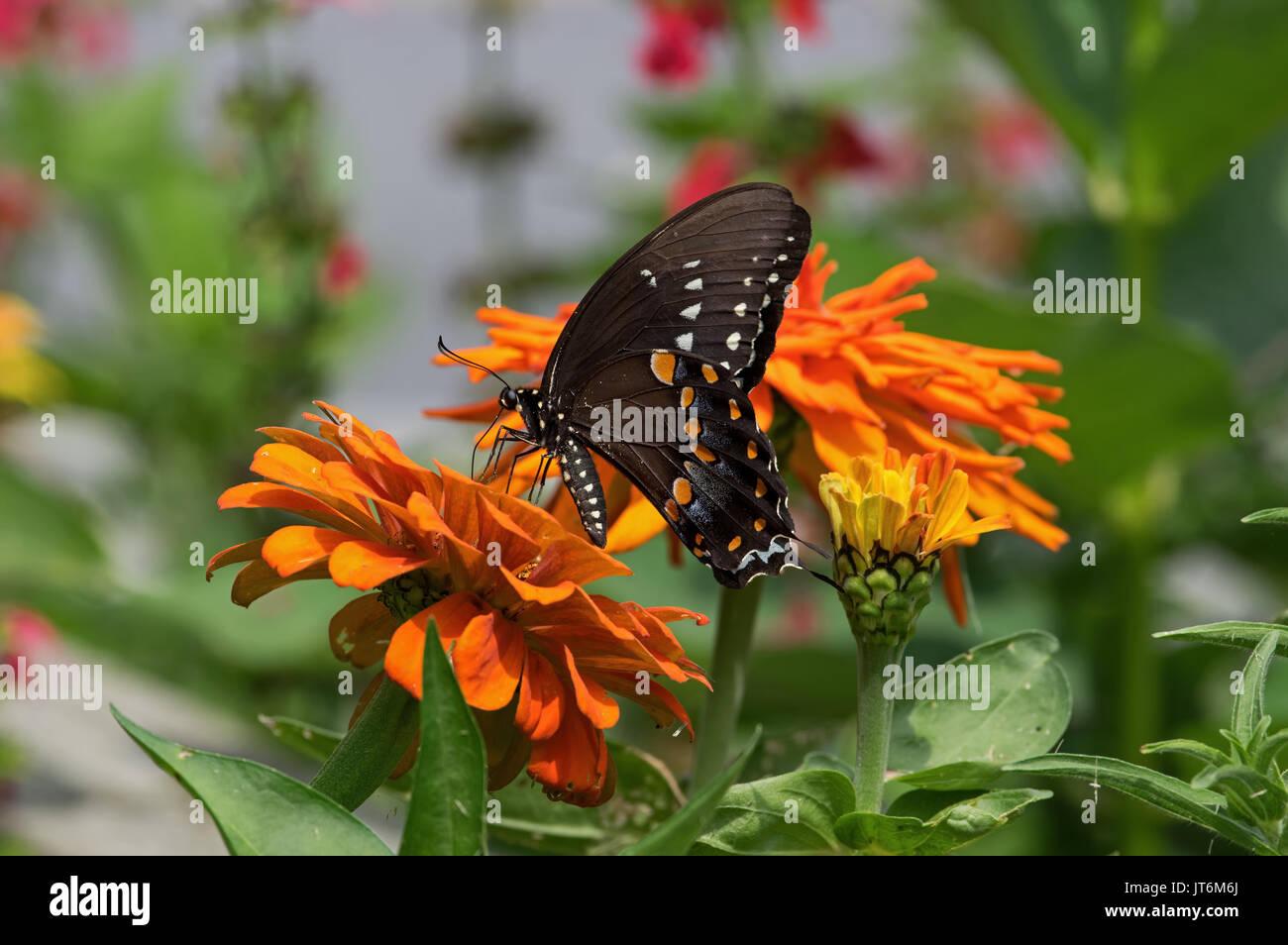 Garden Edges Stock Photos Garden Edges Stock Images Alamy