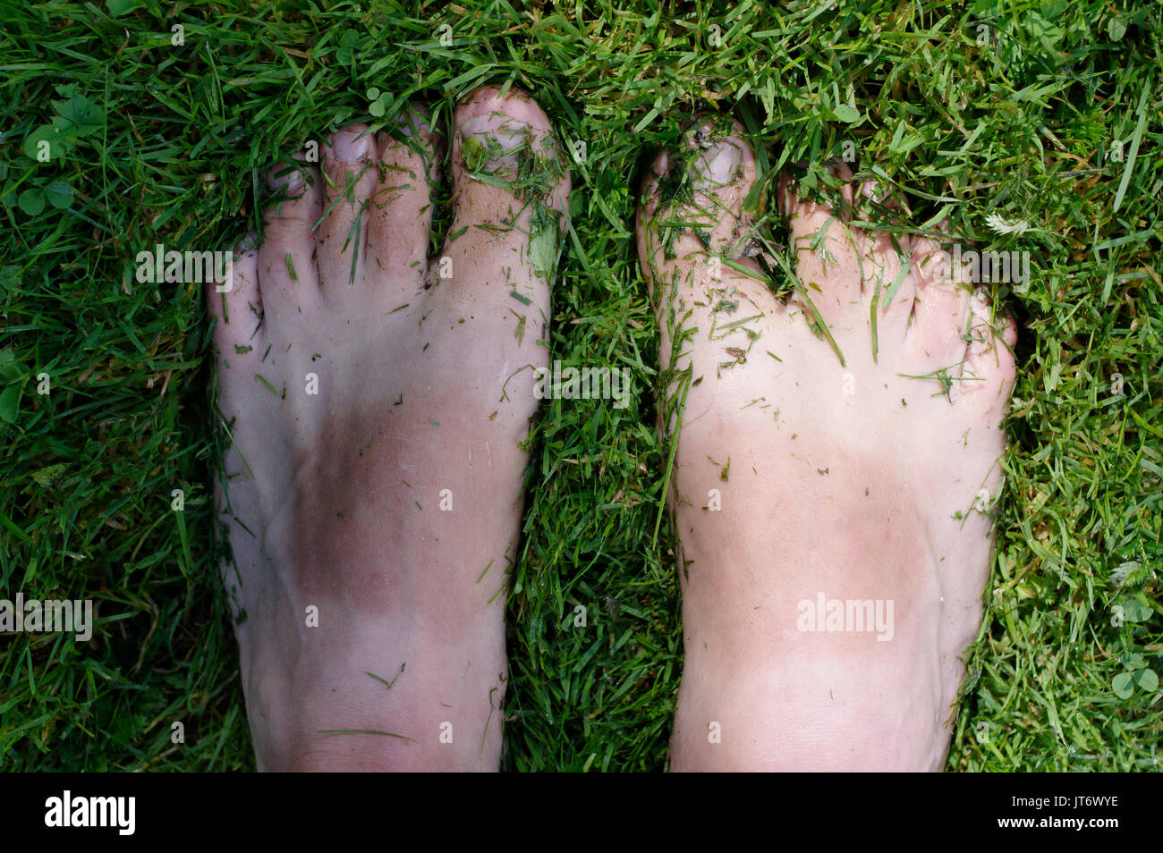 Bare toes in a wet grass - Stock Image