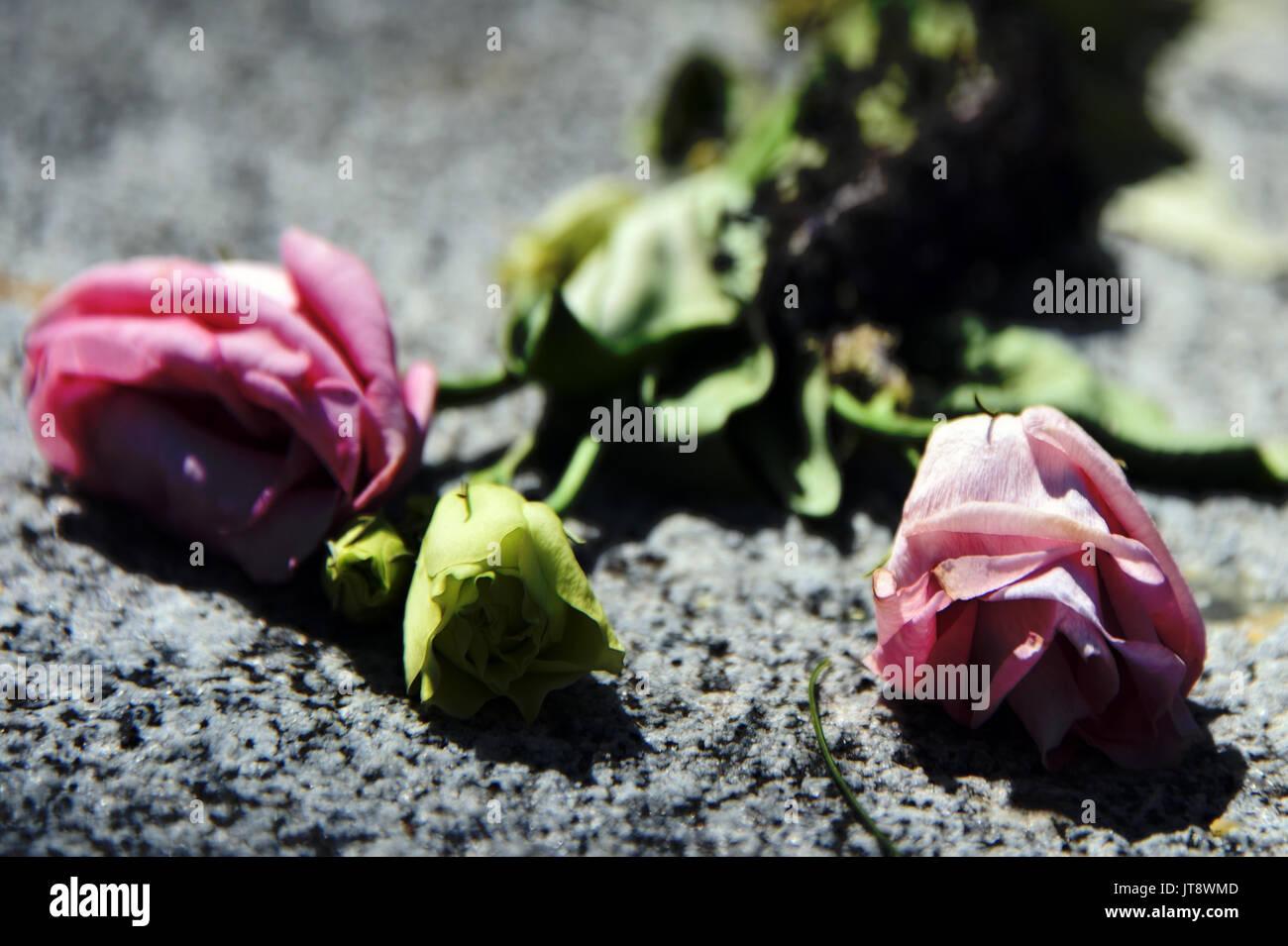 Dead Flowers - Stock Image