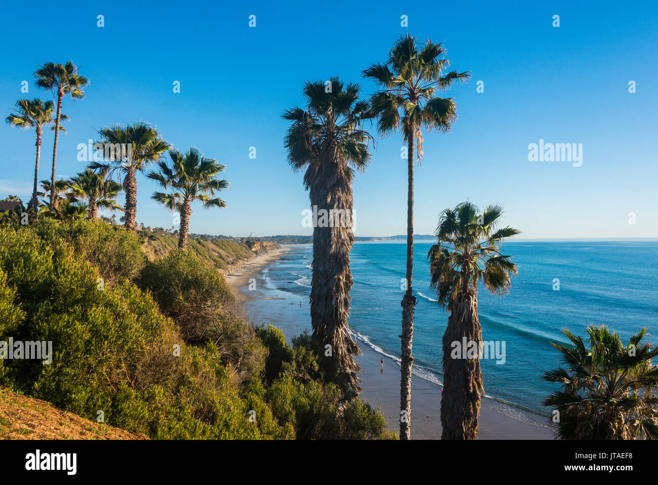 Palm trees above the cliffs in Cardiff, California, United States of America, North America - Stock Image