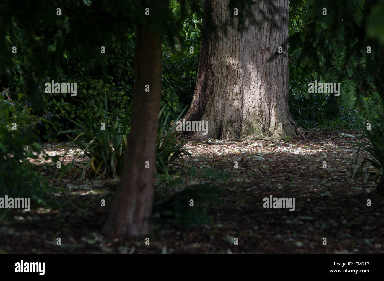 Dark and moody forest scene with dappled sunlight and shadows on trees and leaves in central England - Stock Image