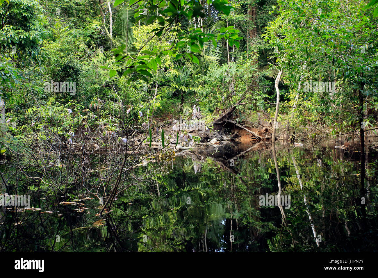 Flooded Area in the Amazon Rainforest, Brazil - Stock Image