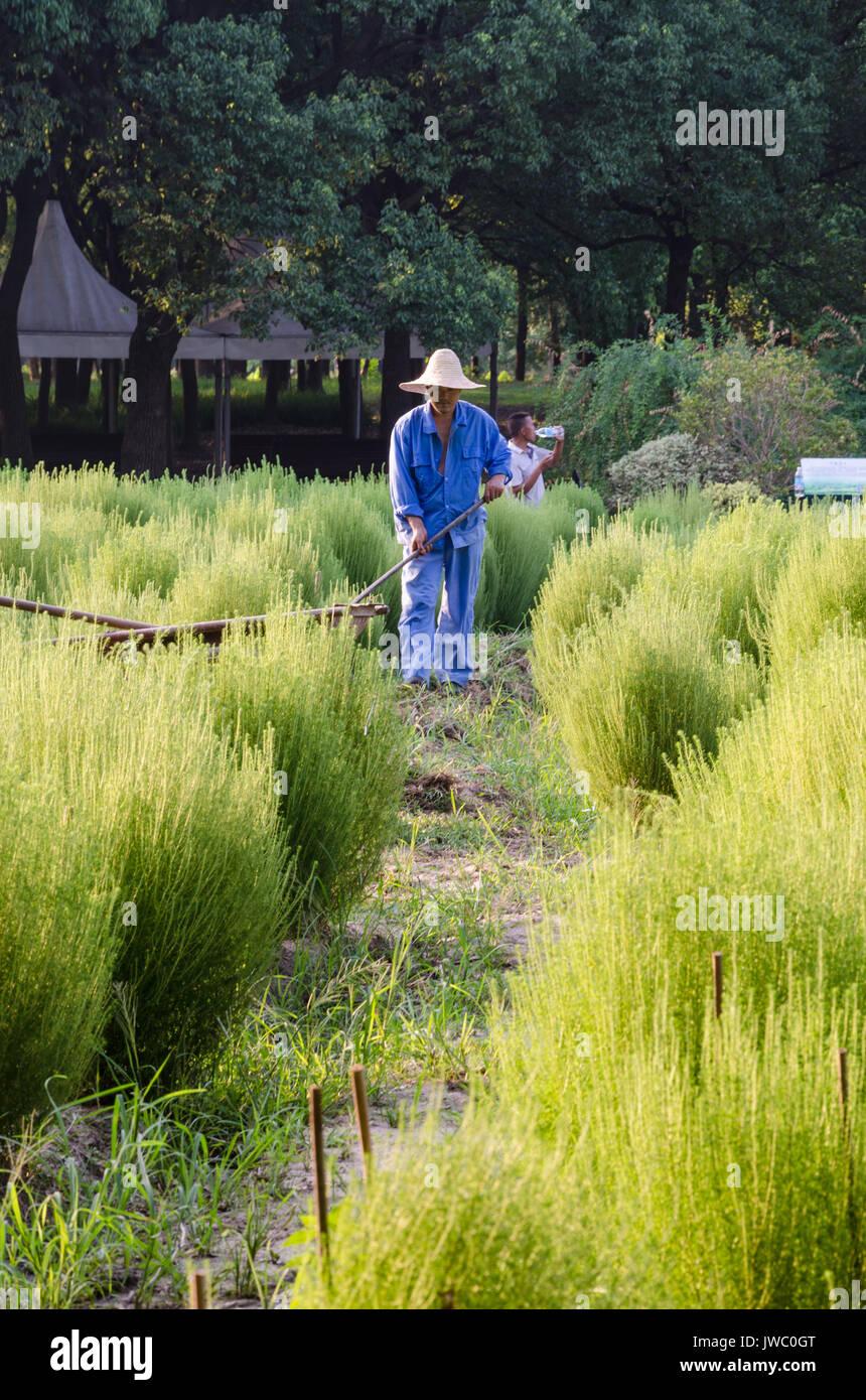 a-gardener-in-century-park-in-shanghai-china-JWC0GT.jpg