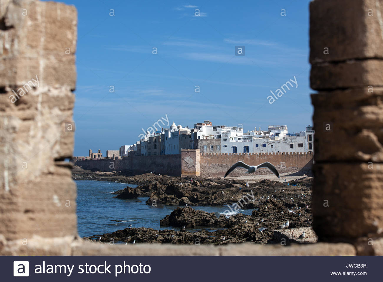 A seagull soars near the walled city of Essaouira,Morocco. - Stock Image
