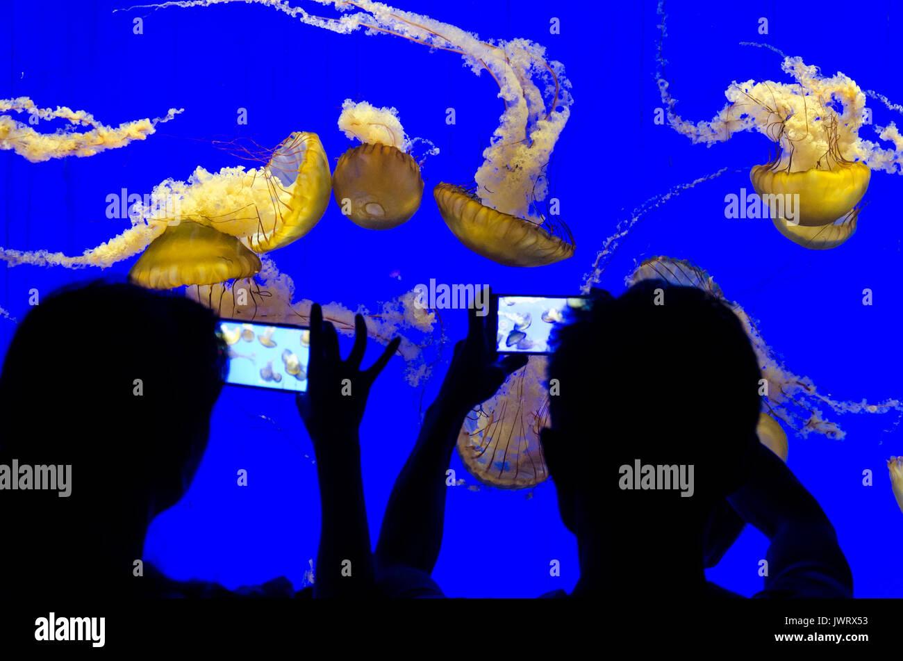 silhouettes-of-people-looking-at-a-tank-of-jellyfish-in-shanghai-aquarian-JWRX53.jpg