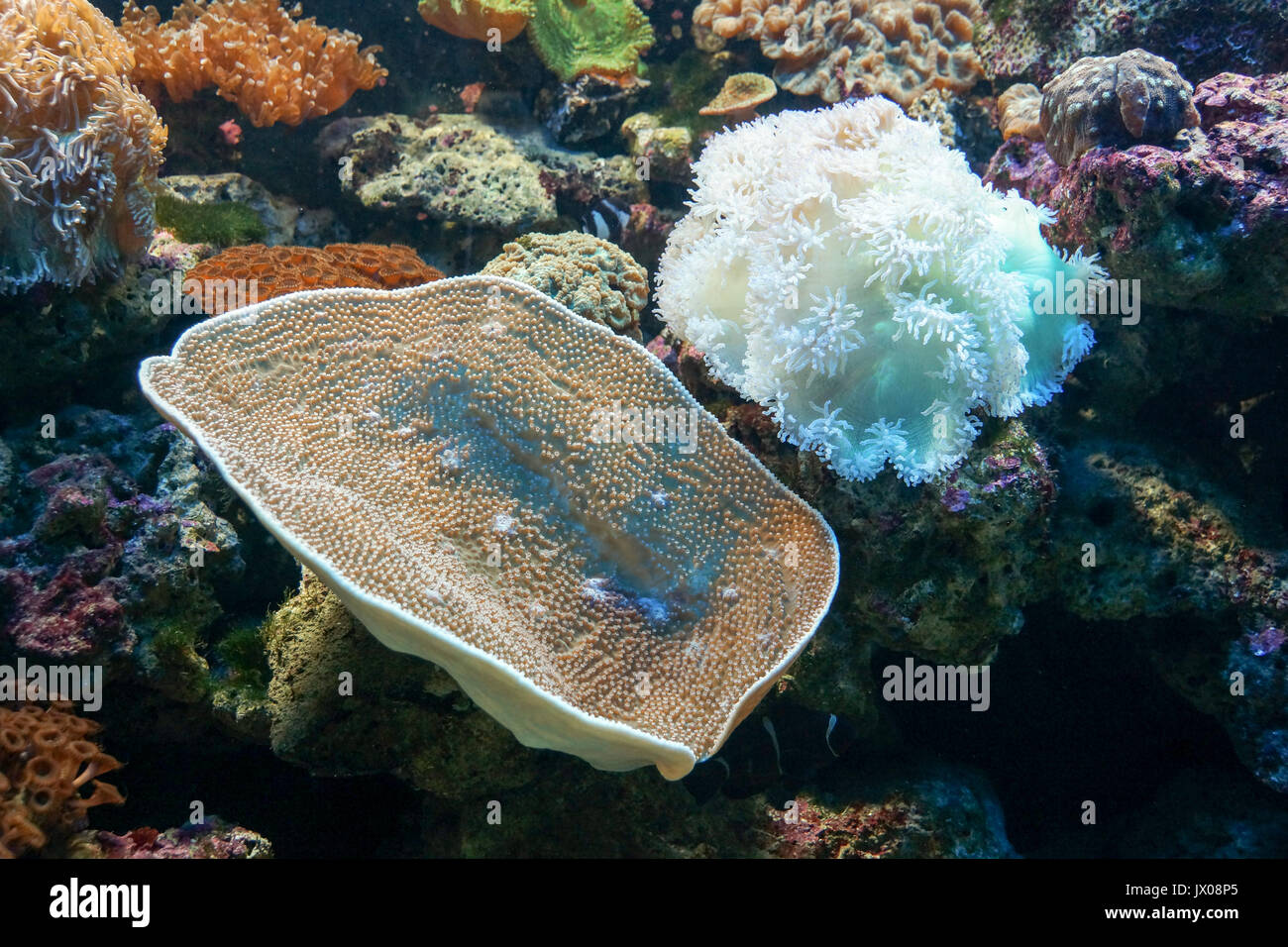 Coral reef with many different types of coral - Stock Image