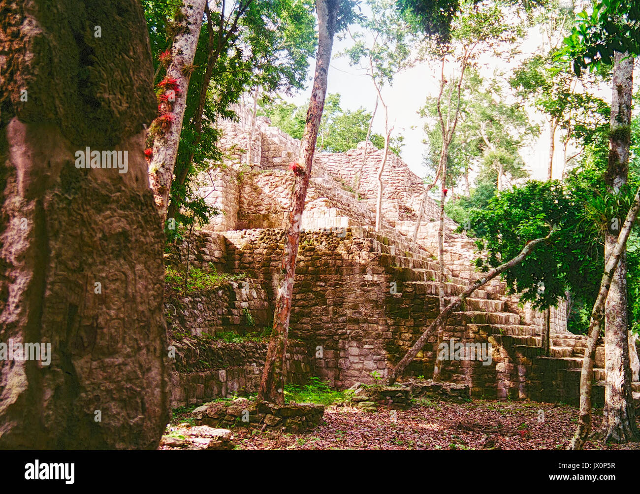 Ancient Mayan ruins at Calakmul, Campeche, Mexico. These ruins were in the process of clearing out all the jungle - Stock Image