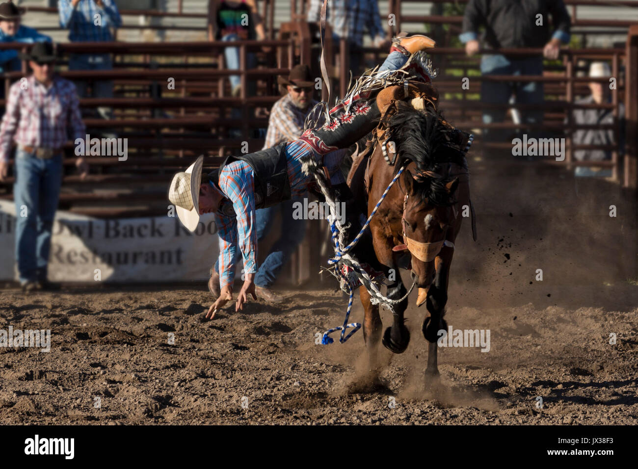 Bronc Riding Stock Photos Amp Bronc Riding Stock Images Alamy