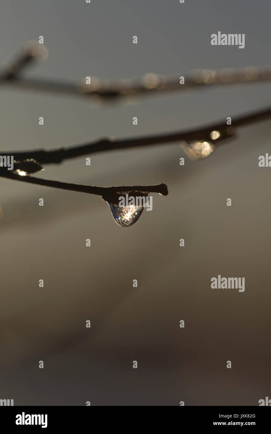 Frozen dew drops are glittering on bare birch twigs on an autumn morning. - Stock Image