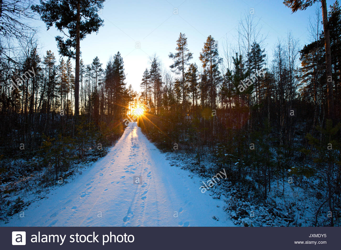 Thin snow covers a forest lane at sunset. - Stock Image
