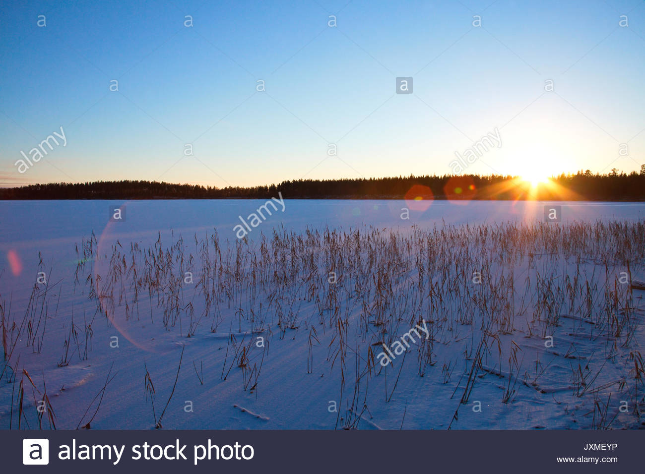 Withered rushes cast shadows on fresh snow. - Stock Image