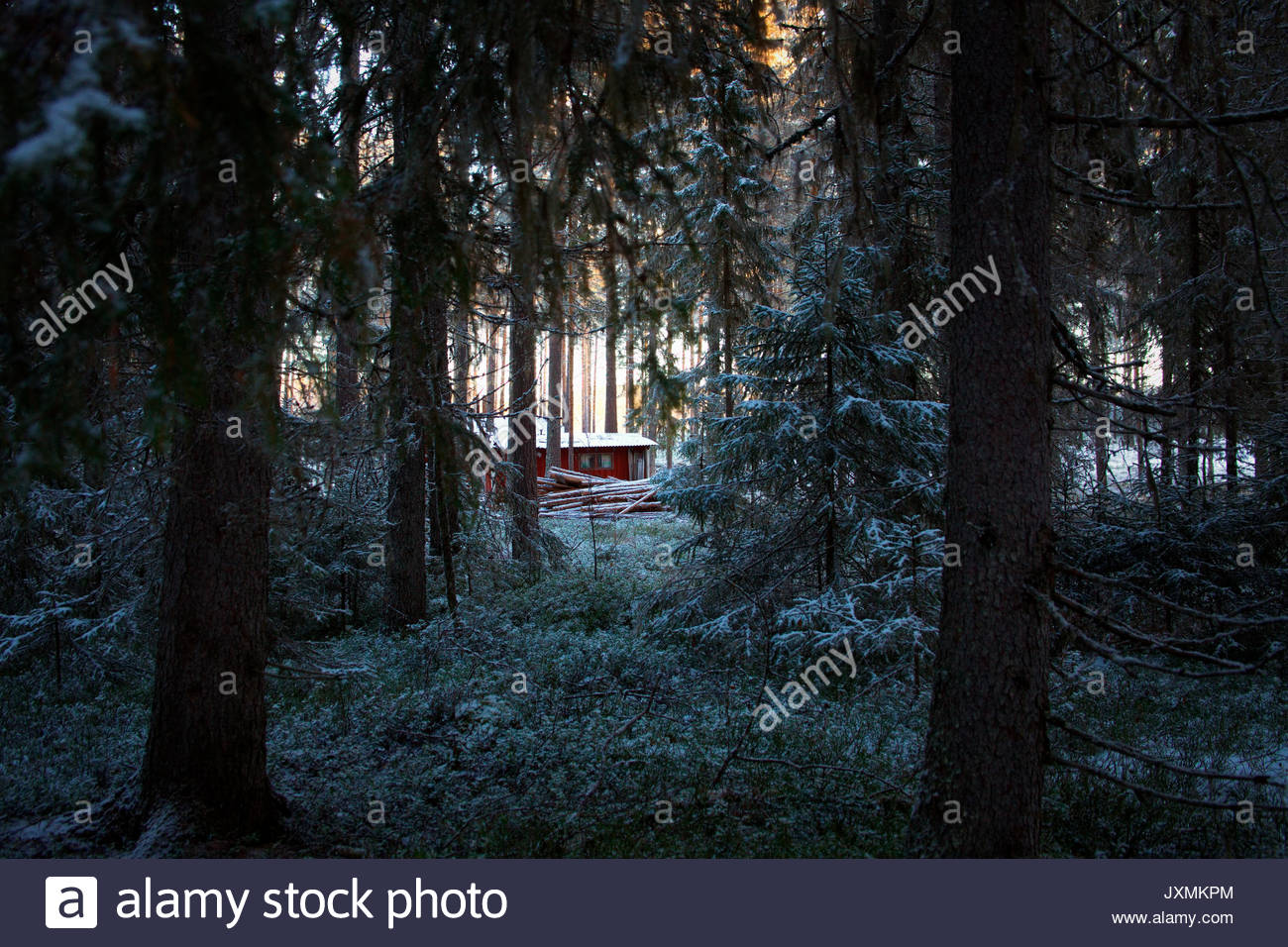 A wooden cottage is standing in snowy forest. - Stock Image