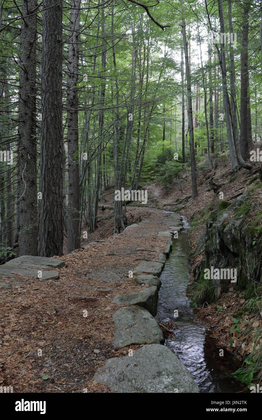 the pines walking trail pdf