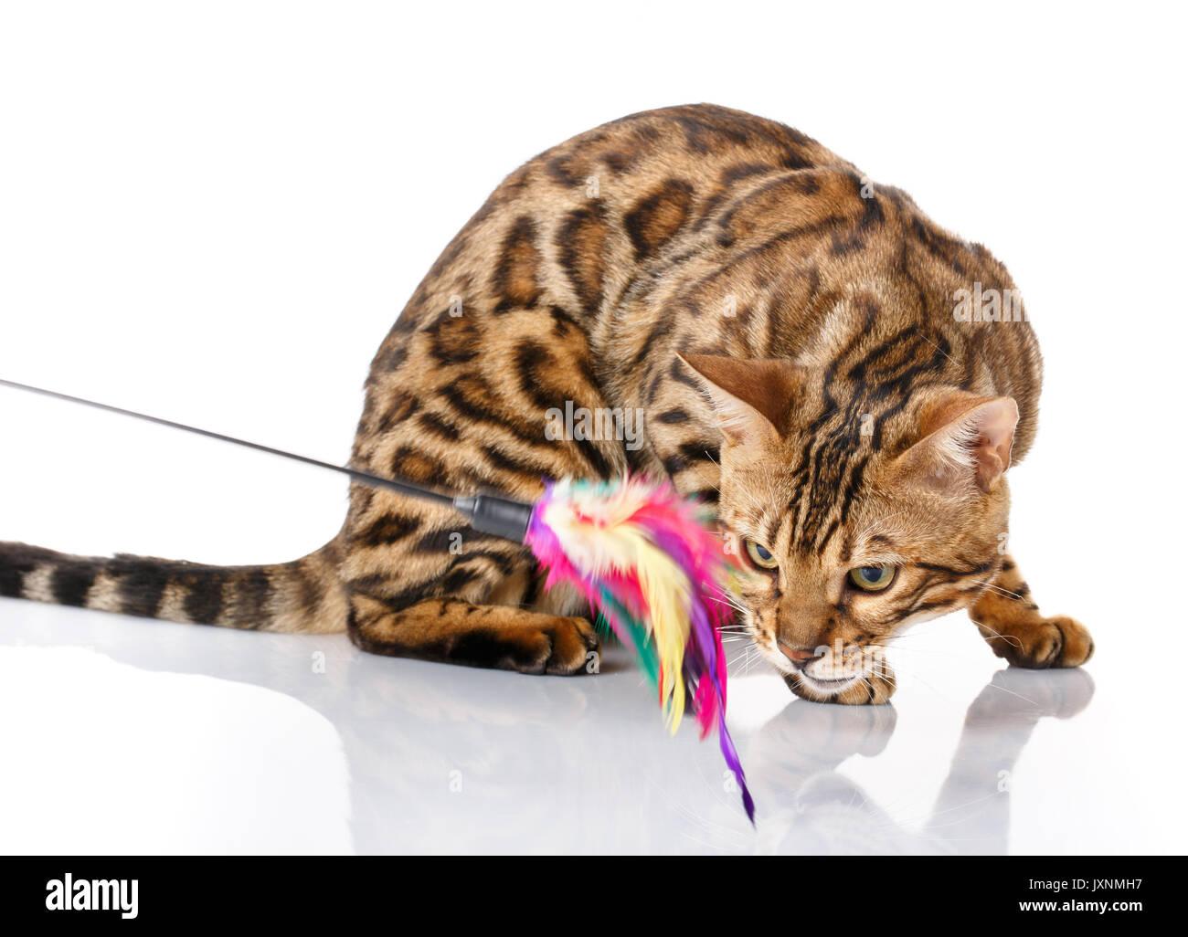 Bengal Cat Climbing Toy