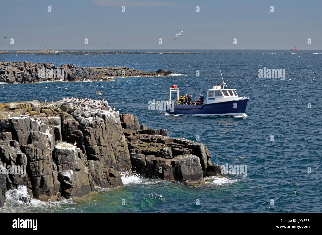 dive boat off the farne islands northumberland england - Stock Image
