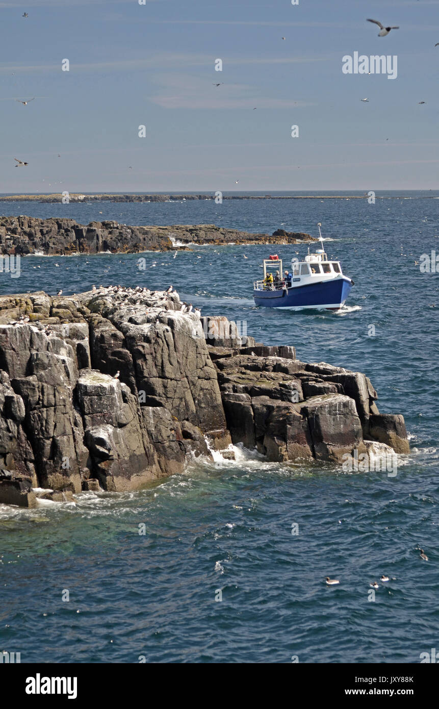 dive boat moving through farne islands, northumberland, great britian - Stock Image