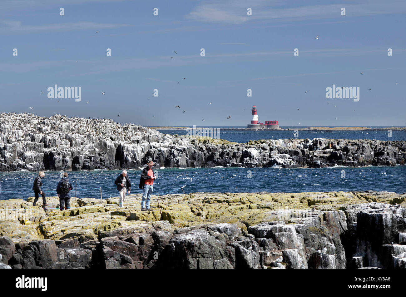 tourists walking on farne islands great britain - Stock Image
