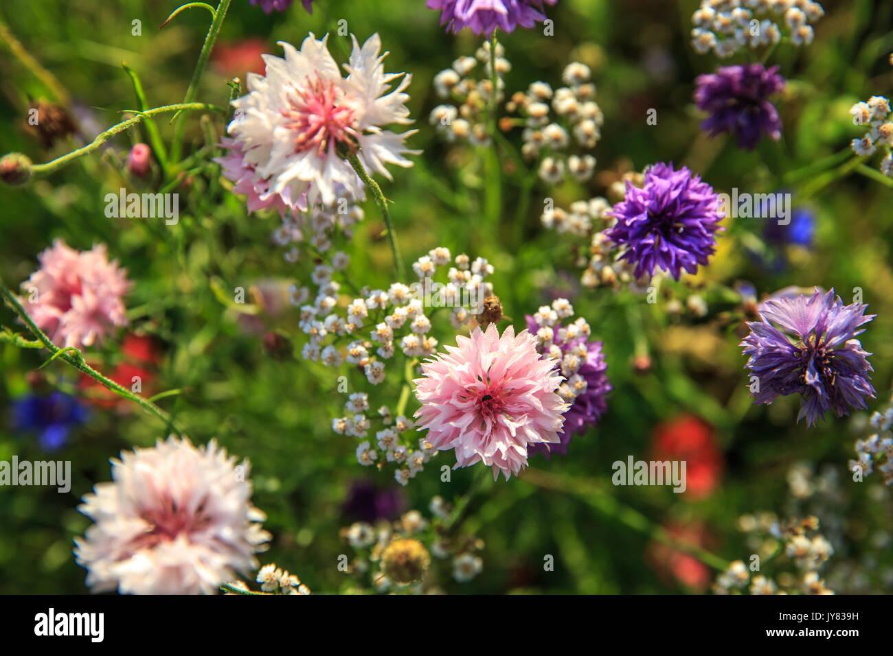 Colorful Alternative Medicine Stock Photos Amp Colorful