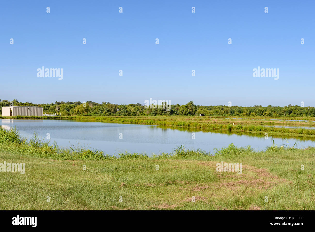Game fish stock photos game fish stock images alamy for Alabama fish hatcheries
