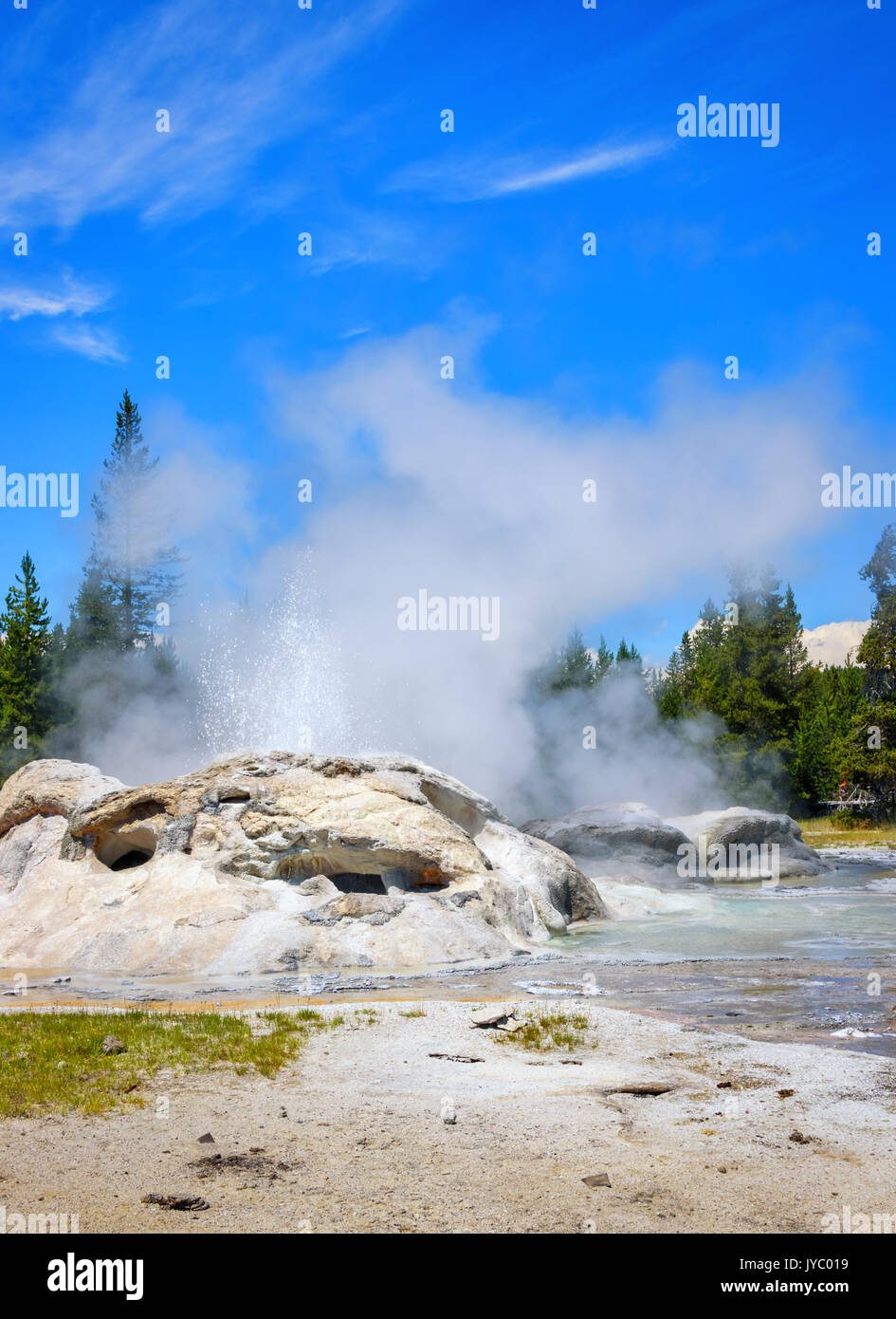 Closeup of steaming, erupting Grotto Geyser in Upper Geyser Basin. Yellowstone National Park. Vertical layout - Stock Image