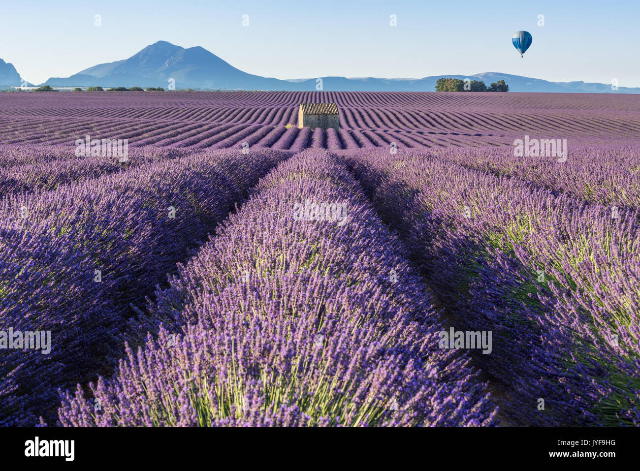 Hot air balloon over Lavender fields of Valensole. Provence, France - Stock Image