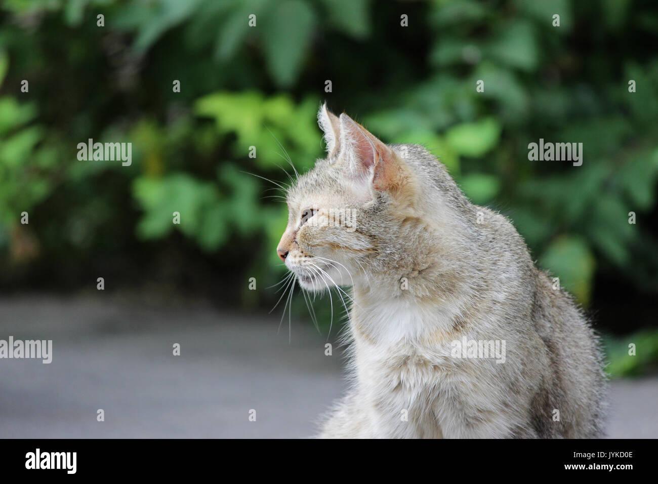 Feline Herpes Virus Natural Treatment